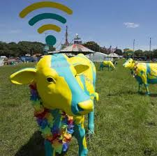 4G Wi-Fi Cows- Glastonbury Festival 2014- Yurt Holidays UK