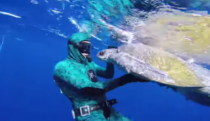 Sea Turtle Embracing Diver After He's Freed From Entanglement