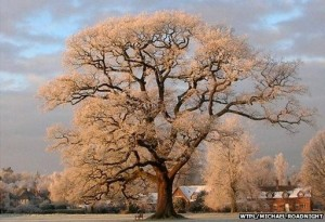 Ickwell Oak, Bedfordshire | England's  Tree of the Year | Treehouse Holidays