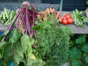 A close up image of some delicious fresh, organic allotment-grown vegetables near our luxury camping holidays.