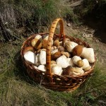 Foraging Forager Basket Mushrooms Wild Edible Plants How To Guide Sustainability | Quality Unearthed Luxury Glamping Holidays UK