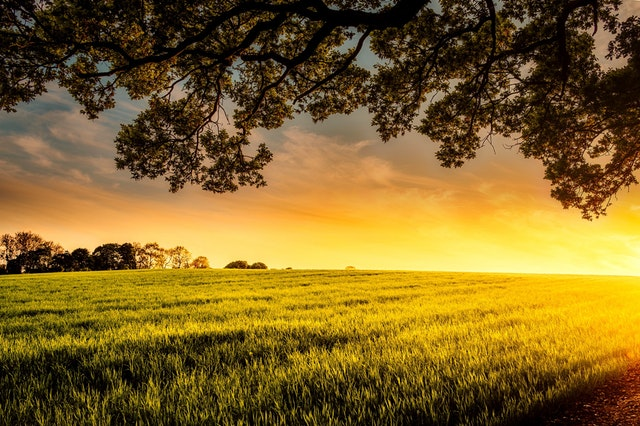 A field at sunset.